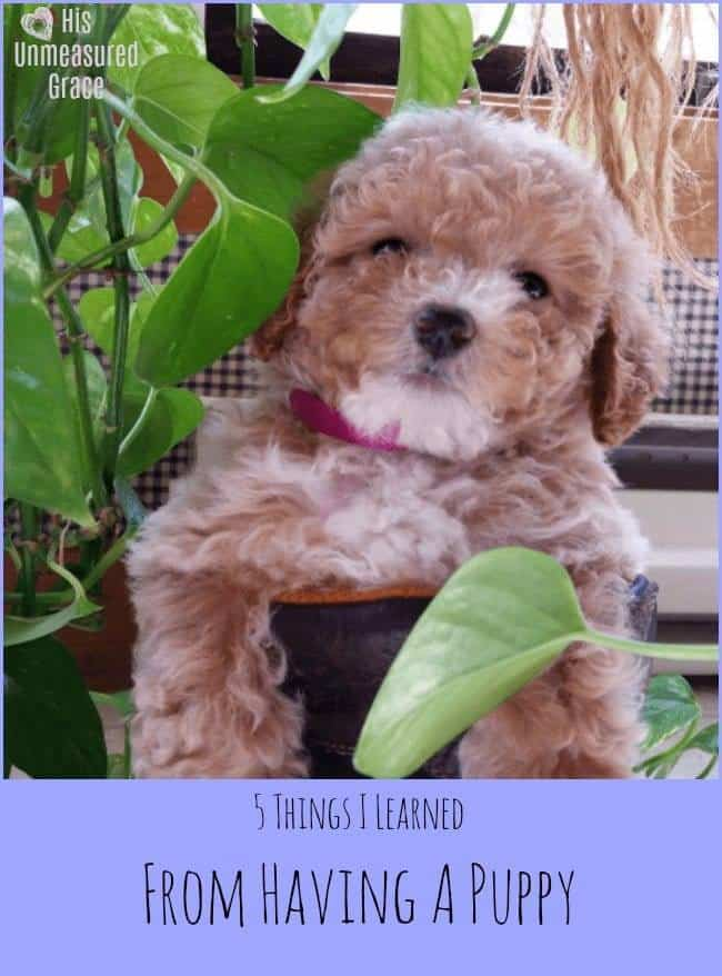 5 Things I Learned from Having a Puppy